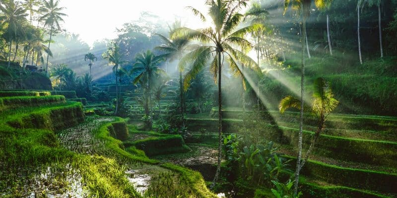 digital-nomad-bali-nature-WiFi-Tribe